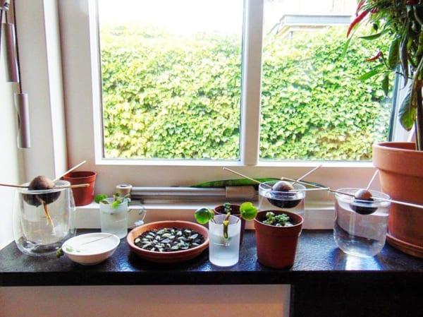 観葉植物を置いて出窓で育む11