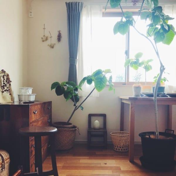 古道具と植物のある素敵な平屋暮らしのインテリア3