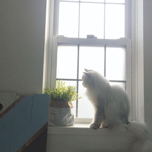 猫は窓の外を見るのが大好き
