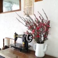 温室のような色とりどりのお部屋に♡冬のインドアガーデニングにおすすめの花