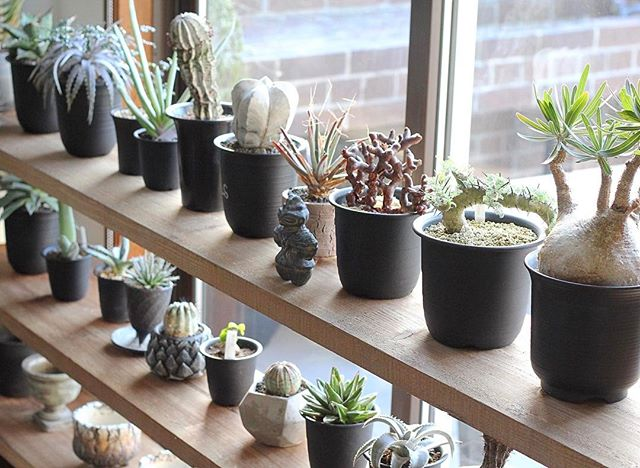 多肉植物は寄せ植えか並べて飾るとおしゃれ!