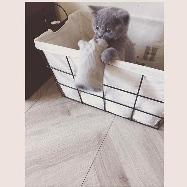 猫のベッド3
