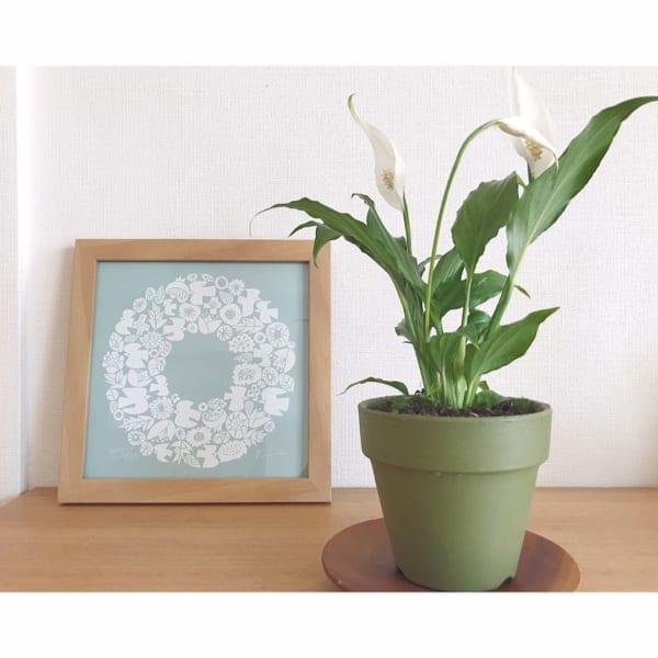 ベランダでも室内でも育てられる観葉植物4