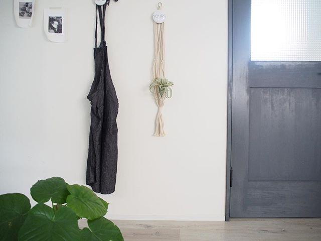 植物を飾る13
