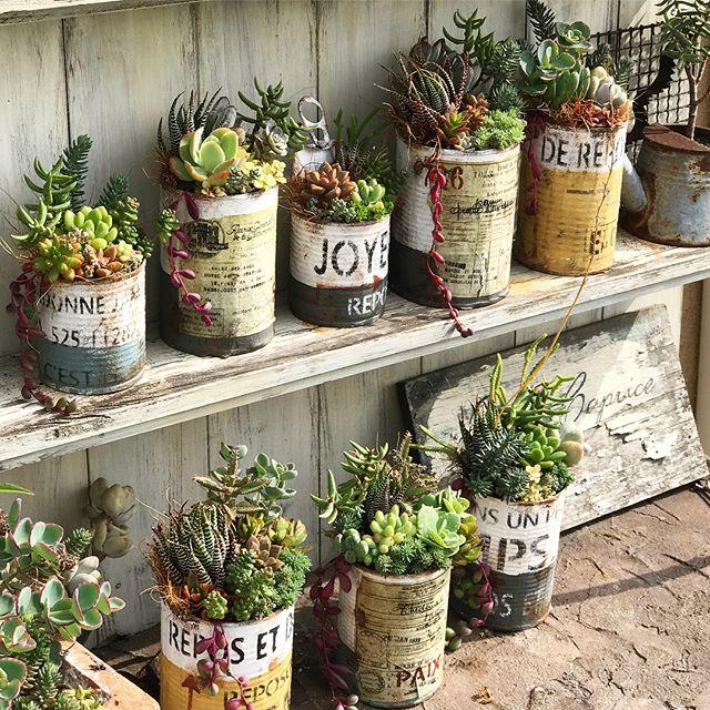 心が癒される植物のある暮らし9