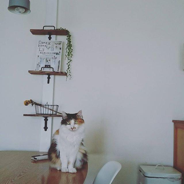 猫がじゃれるポイントはおしゃれに
