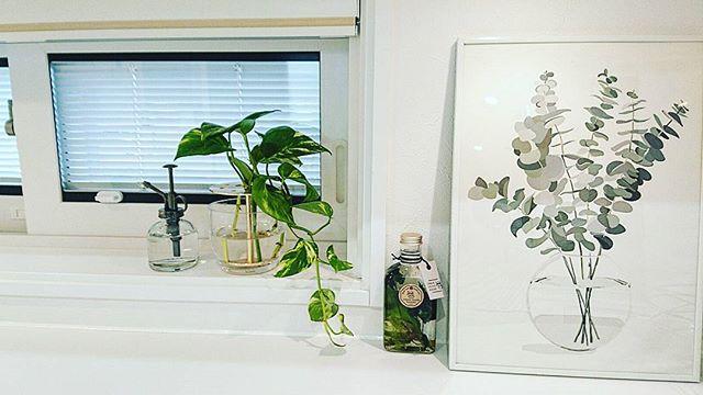 植物のアートフレーム