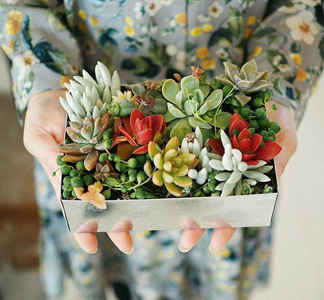 多肉植物は寄せ植えか並べて飾るとおしゃれ!3