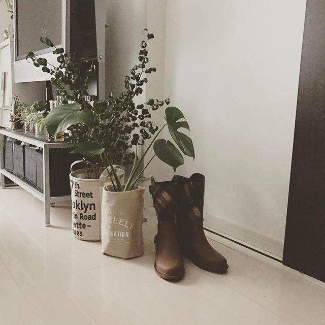 心が癒される植物のある暮らし3