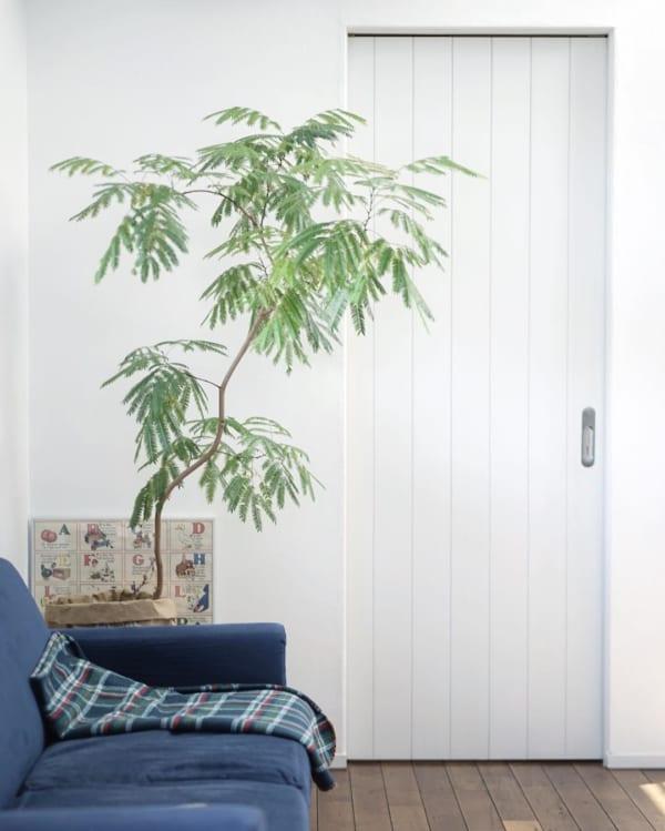 大きい観葉植物16
