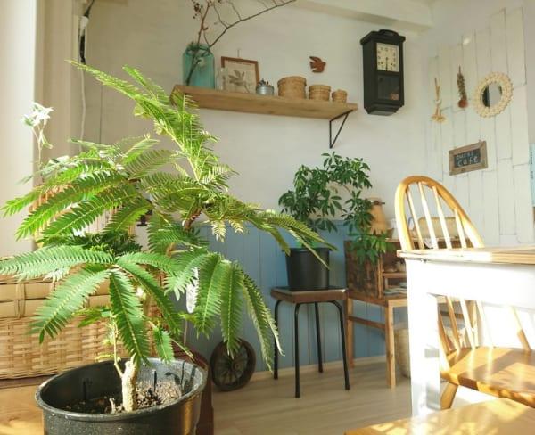 大きい観葉植物17
