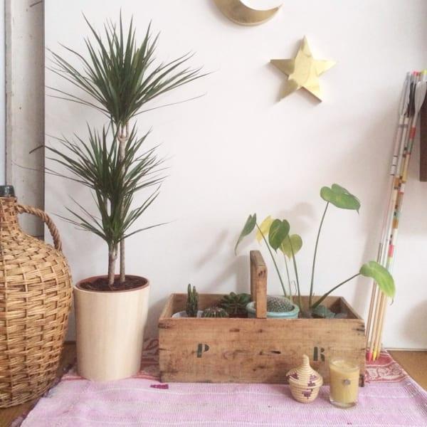 大きい観葉植物21