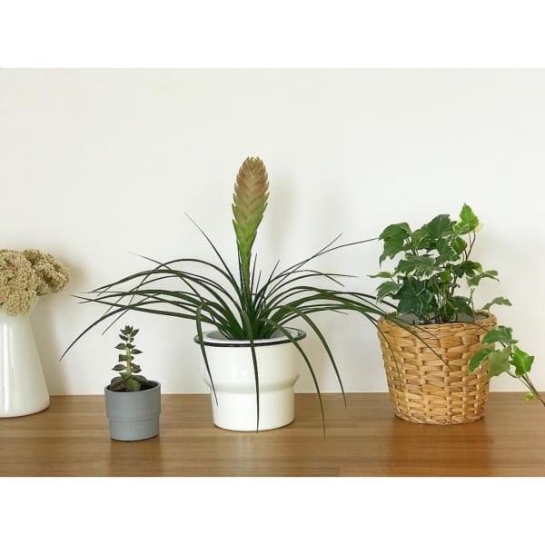 小さい観葉植物3