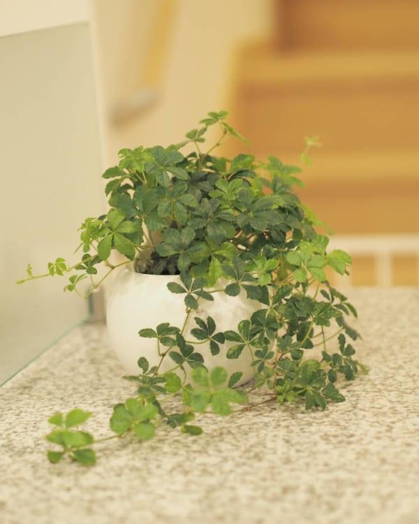 小さい観葉植物26