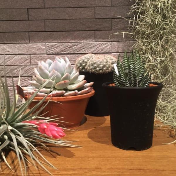 小さい観葉植物35