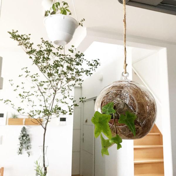 小さい観葉植物2