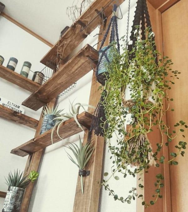 ベランダでも室内でも育てられる観葉植物2