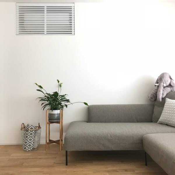 ベランダでも室内でも育てられる観葉植物5