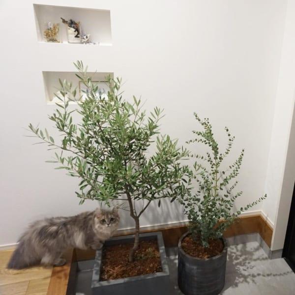 ベランダでも室内でも育てられる観葉植物7