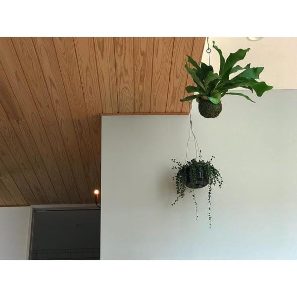 小さい観葉植物16