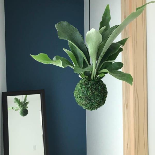 小さい観葉植物15
