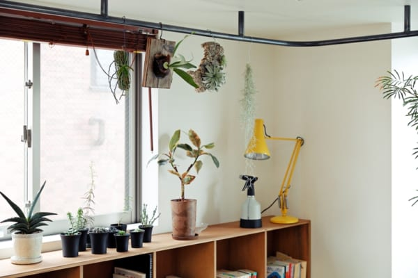 南側の広いバルコニーや土間で、増え続ける植物を愛でる暮らし4