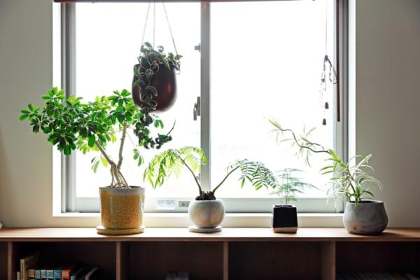 南側の広いバルコニーや土間で、増え続ける植物を愛でる暮らし5