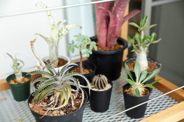 南側の広いバルコニーや土間で、増え続ける植物を愛でる暮らし6