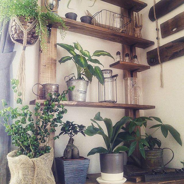 リビングに観葉植物を飾ろう15