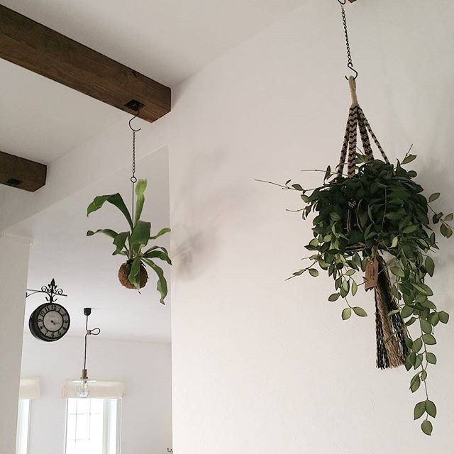 天井から吊るして