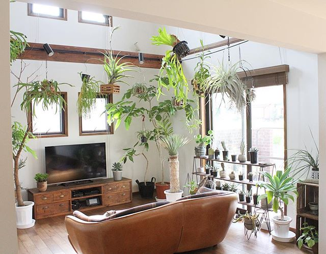 植物のあるリビング3