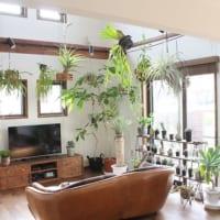 リラックス効果も抜群!「植物のある暮らし」でほっこりとした癒し空間を
