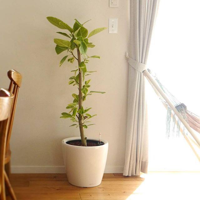 リビングに観葉植物を飾ろう29