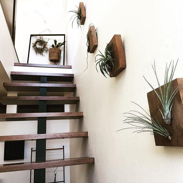 リビングに観葉植物を飾ろう44
