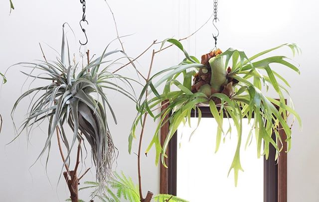 リビングに観葉植物を飾ろう14