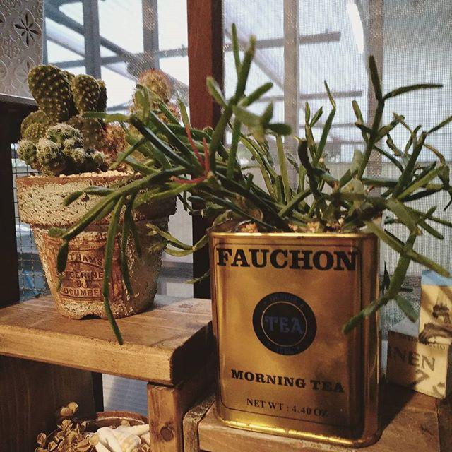 アイディアが光る紅茶缶の植木鉢