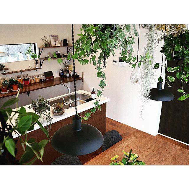 リビングに観葉植物を飾ろう3
