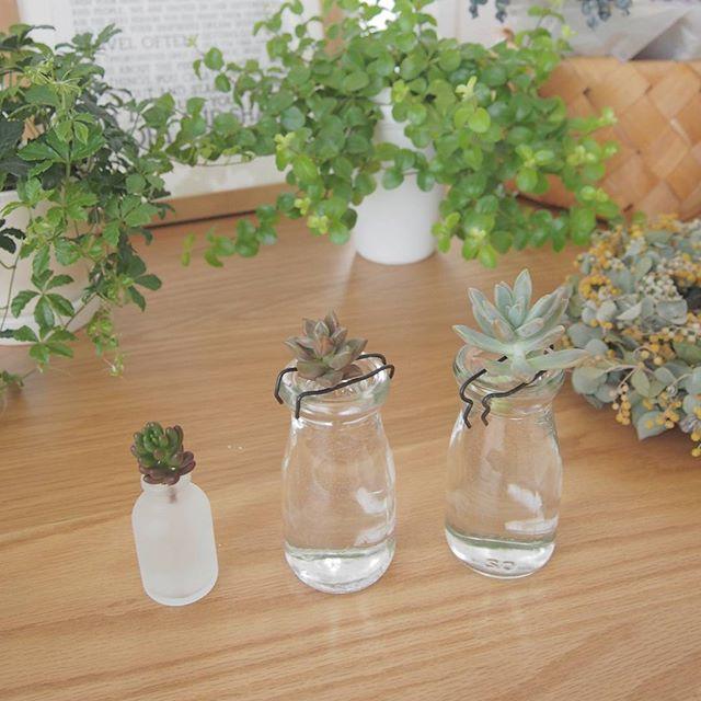 観葉植物を飾るコツ