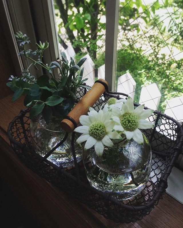 マルティネリの空き瓶を花瓶に活用