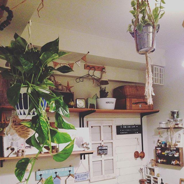 リビングに観葉植物を飾ろう37