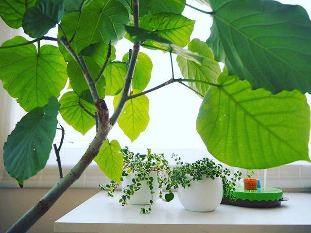 リビングに観葉植物を飾ろう5