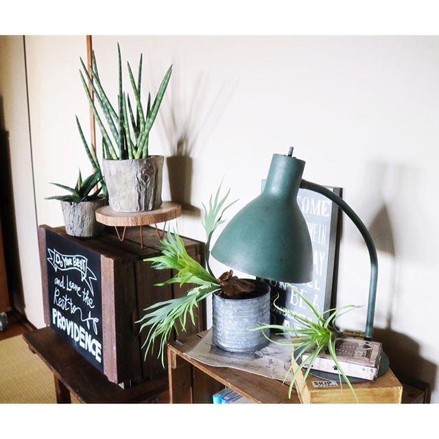 リビングに観葉植物を飾ろう12
