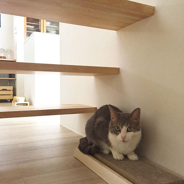 猫のためのリラックス空間を作る2