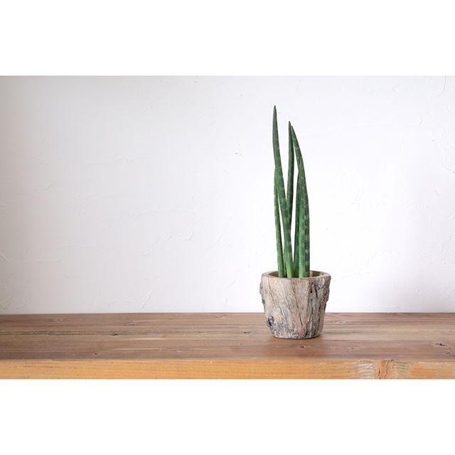 リビングに観葉植物を飾ろう6