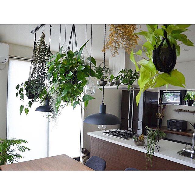 リビングに観葉植物を飾ろう42