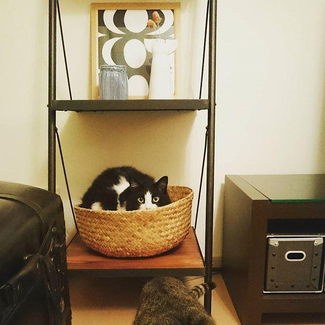 猫のためのリラックス空間を作る3