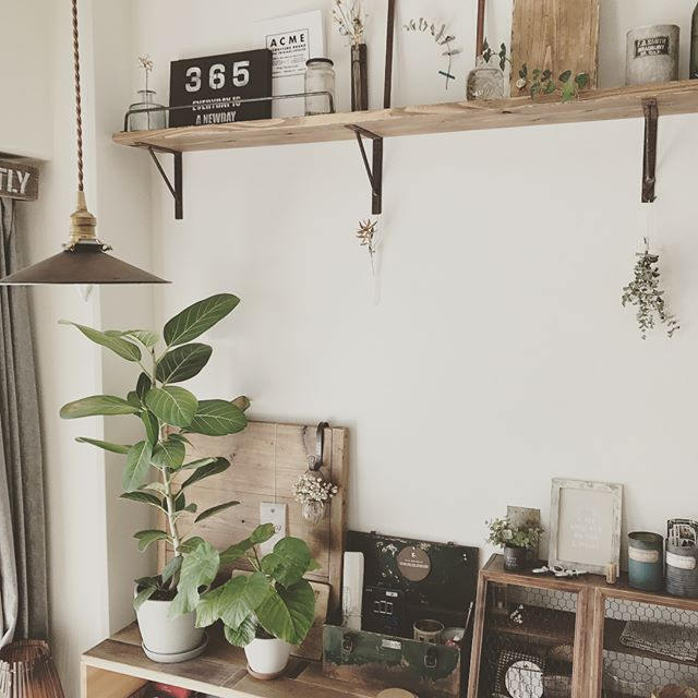リビングに観葉植物を飾ろう13
