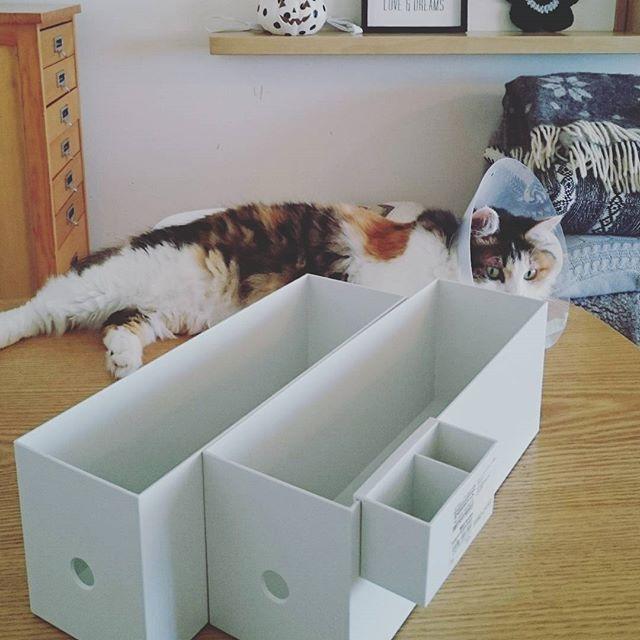 ファイルボックス 活用例8
