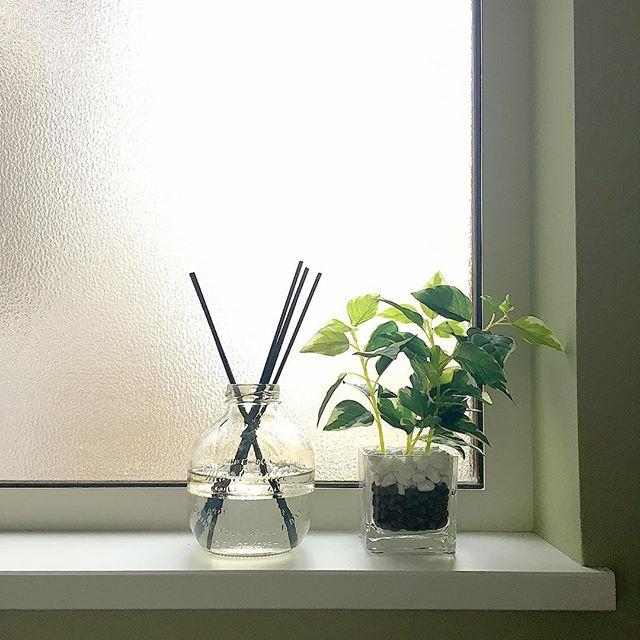 5. 耐陰性のあるリアル観葉植物を置いて運気もアップ