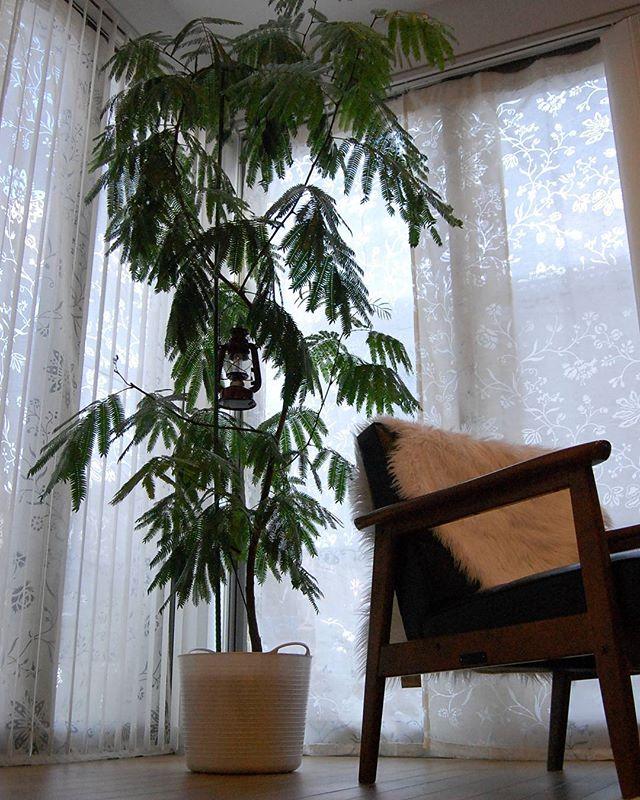 リビングに観葉植物を飾ろう11